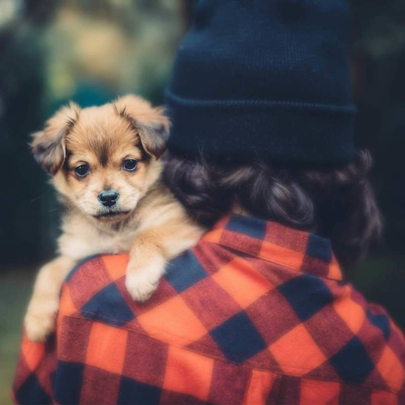 This cute puppy becomes the focus of the photo when the right filter is applied.