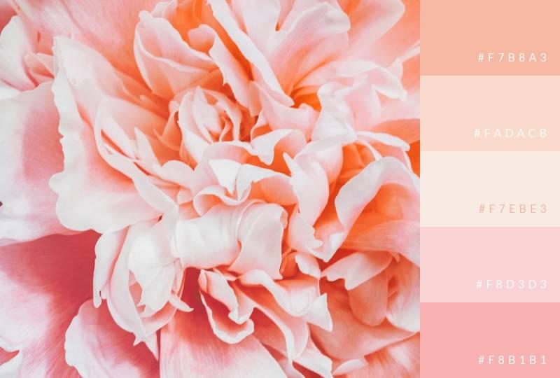 color-palette-pinks