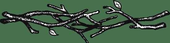 Branch Bough