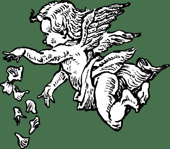 Cupid & Petals