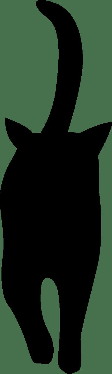 Approaching Cat