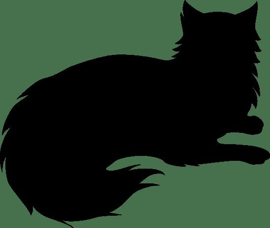 Perched Cat