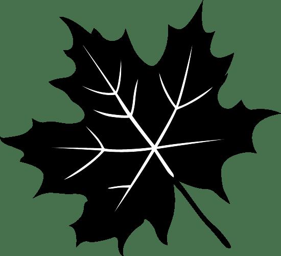 Dark Maple Leaf