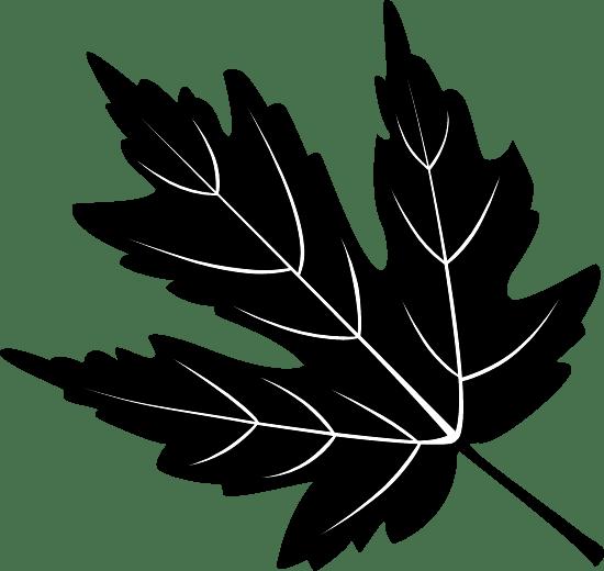 Sable Maple Leaf