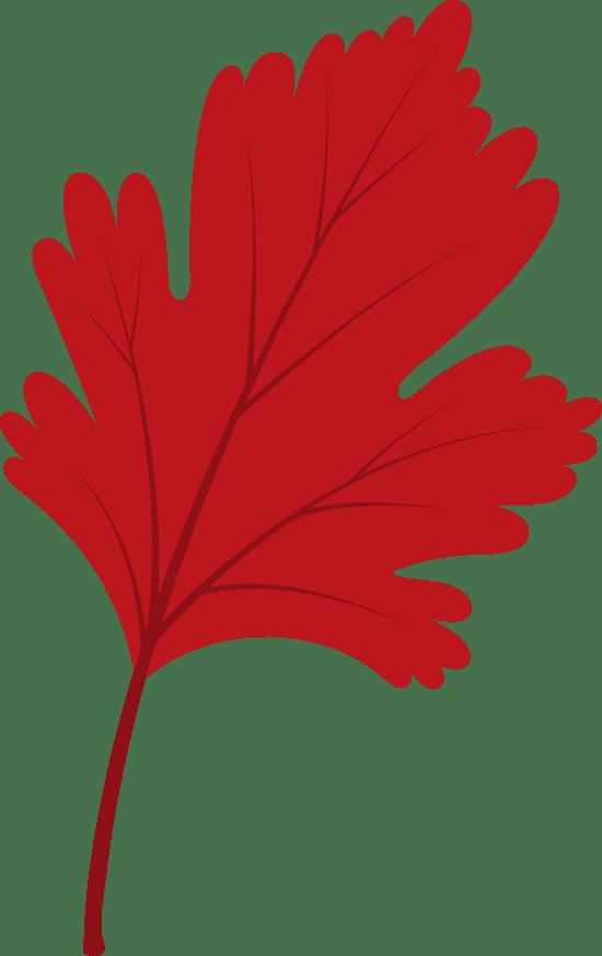 Small Sassafras Leaf