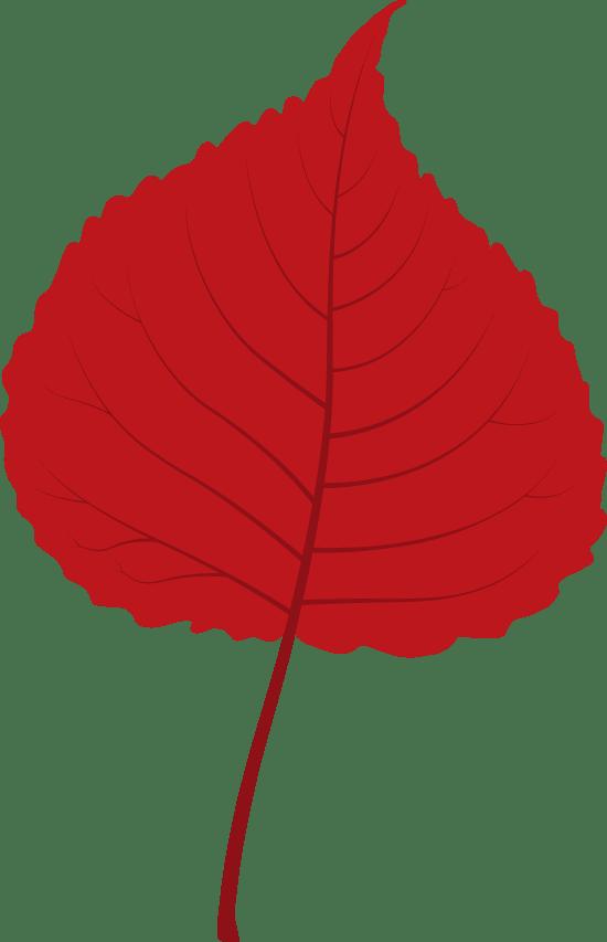 Small Lime Leaf