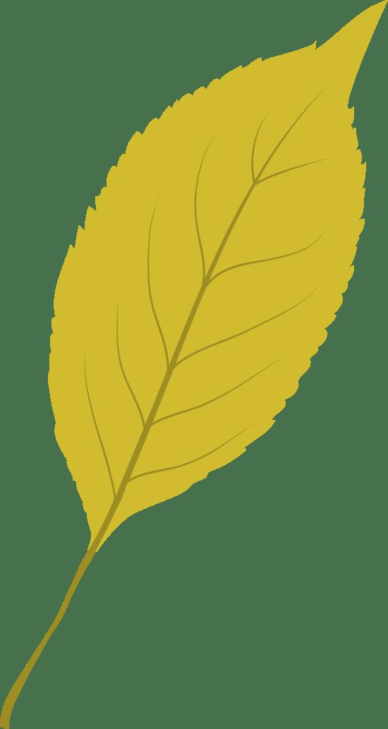 Bright Ash Leaf