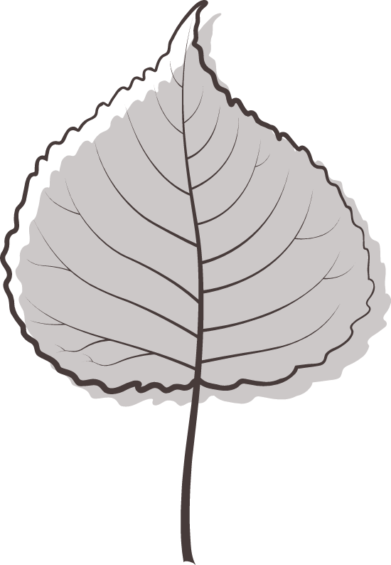 Gray Poplar Leaf