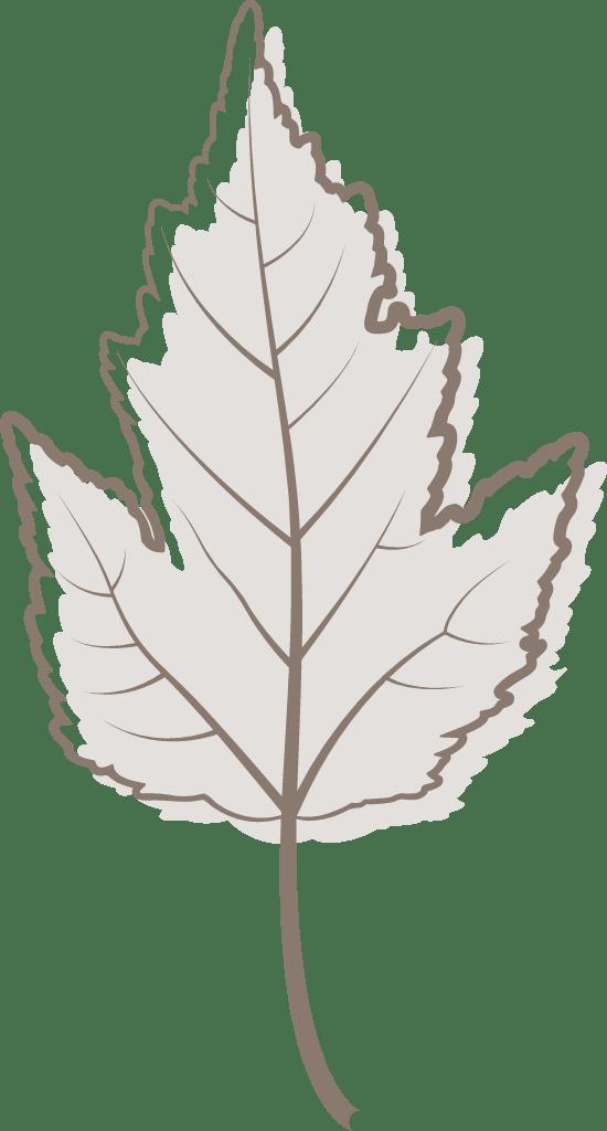 Gray Viburnum Leaf