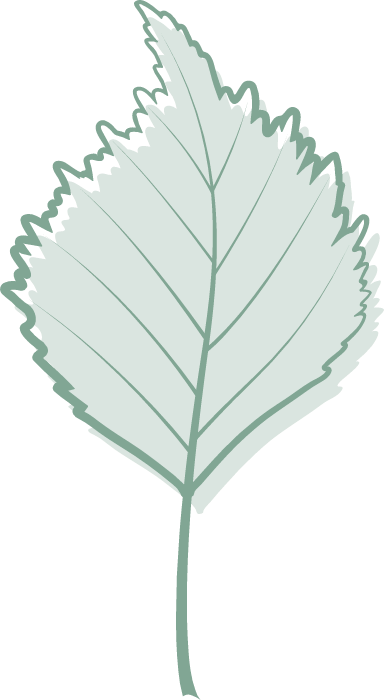 Green Linden Leaf