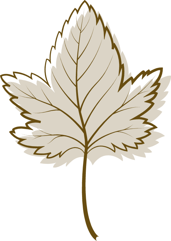 Brown Sycamore Leaf
