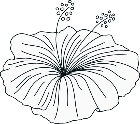 Illustrated Stamens