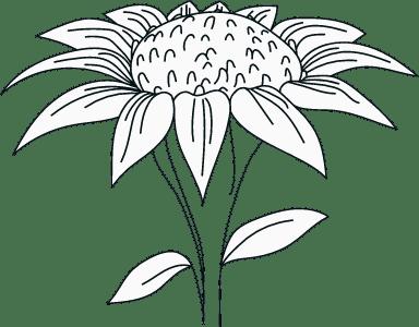 Illustrated Stalk