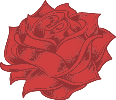 Wide Red Rose