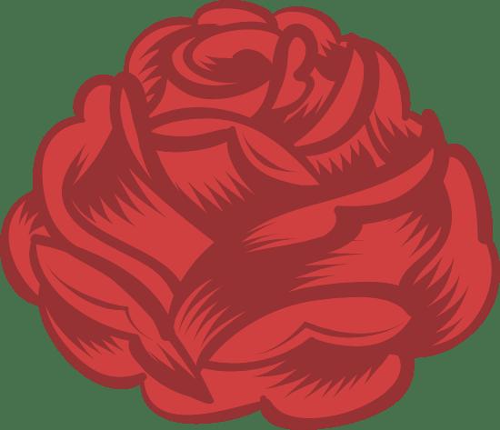 Full Red Rose