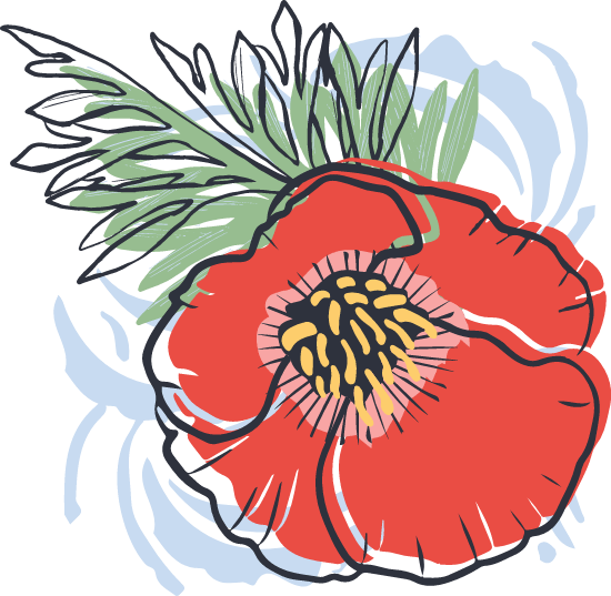 Painted Poppy