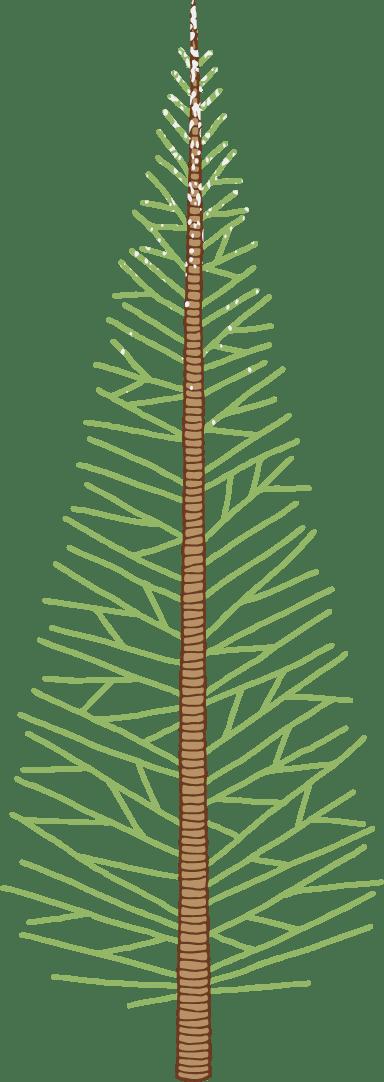 Thuja Tree