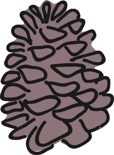 Conifer Pinecone