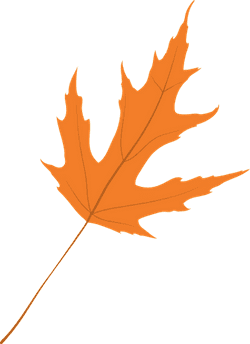 Clear Maple Leaf