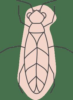 Halloween Termite