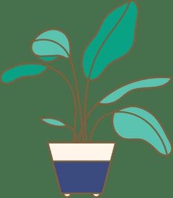 Potted Broadleaf Plant