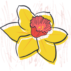 Painted Narcissus