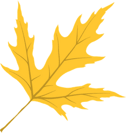 Vivid Maple Leaf