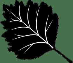 Black Aspen Leaf