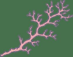 Marine Coral Branch