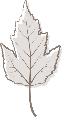 Gray Viburnum Leaf