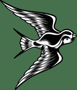 Flapping Blackbird