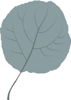Plain Hazel Leaf