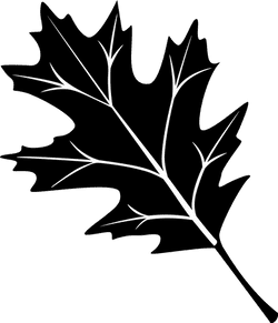 Black Oak Leaf