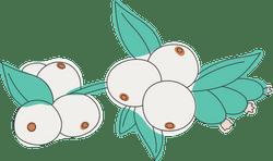 White Snowberries