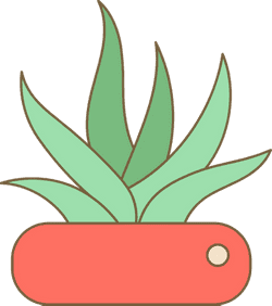 Potted Aloe Plant